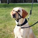 Harnais de Dressage Top Trainer pour chiens