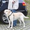 Laisse courte de Sécurité Universelle pour chien