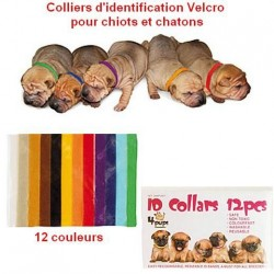 COLLIERS IDENTIFICATION CHIOTS (x12)