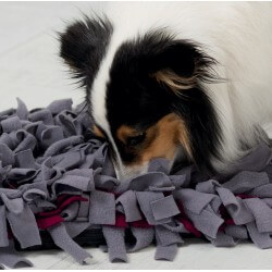 Activity Sniffing Carpet Jeu de stratégie