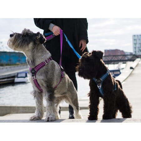 DOG COPENHAGEN : Harnais confort WALK AIR