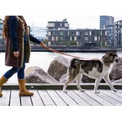 DOG COPENHAGEN : Laisse Urban Freestyle