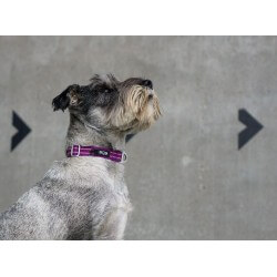 DOG COPENHAGEN : Collier Urban Style