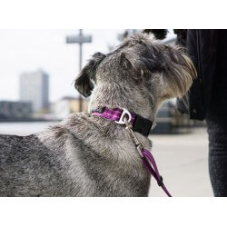 DOG COPENHAGEN : Collier Urban Style