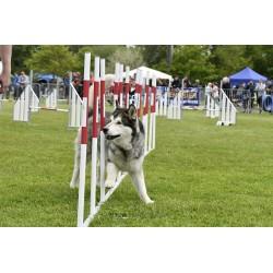 ELITE : Slalom de Compétition
