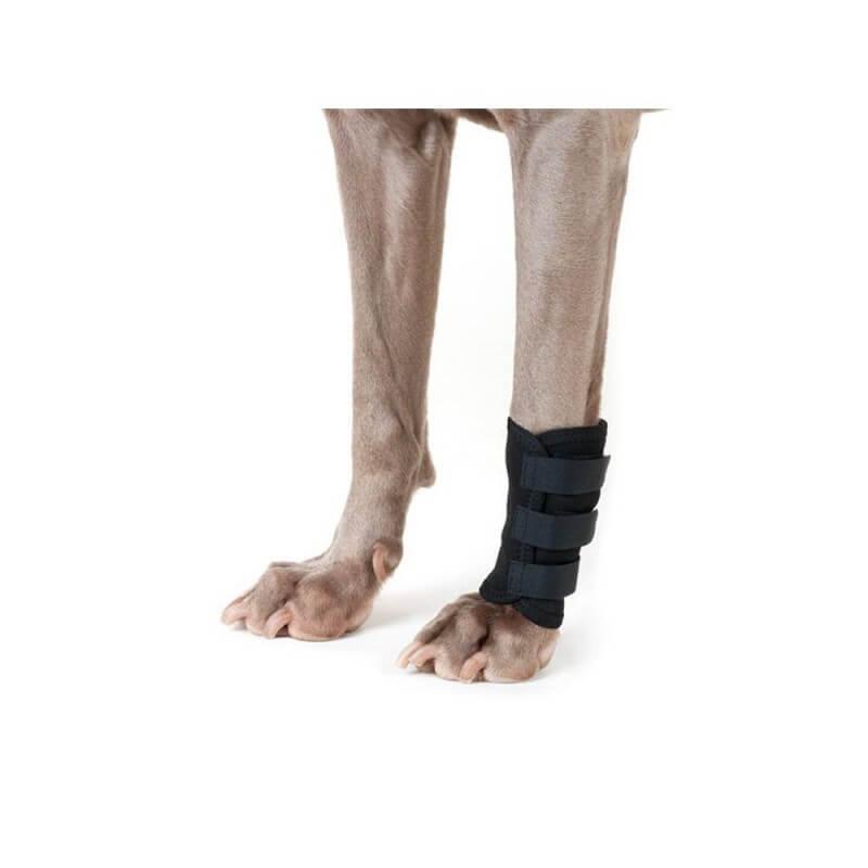 BACK ON TRACK - Protection de patte avant pour chien
