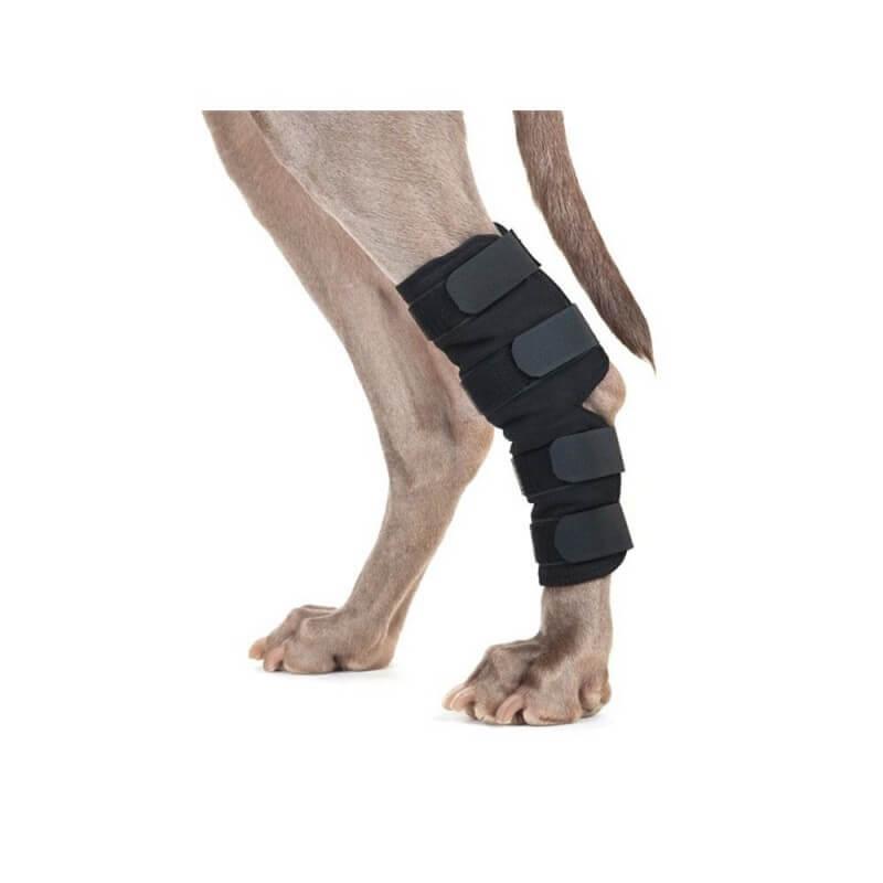 BACK ON TRACK - Protection de patte arrière pour chien