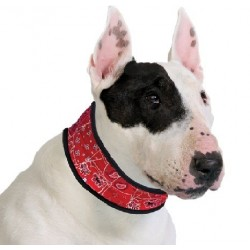 AQUA COOLKEEPER - Collier rafraîchissant pour chien Aqua Coolkeeper - 1