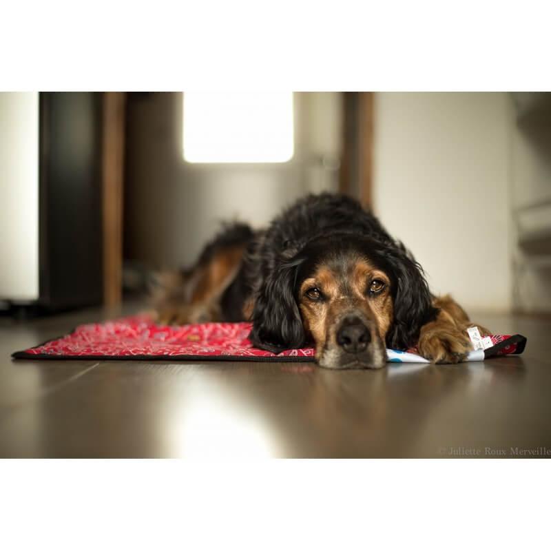 AQUA COOLKEEPER - Tapis rafraîchissant pour chien Aqua Coolkeeper - 1