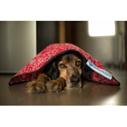 AQUA COOLKEEPER - Tapis rafraîchissant pour chien Aqua Coolkeeper - 3