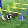 FITPAWS - Canine Gym Dog Agility Kit - 100% Remboursé !