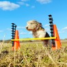 FITPAWS - Hurdle Set