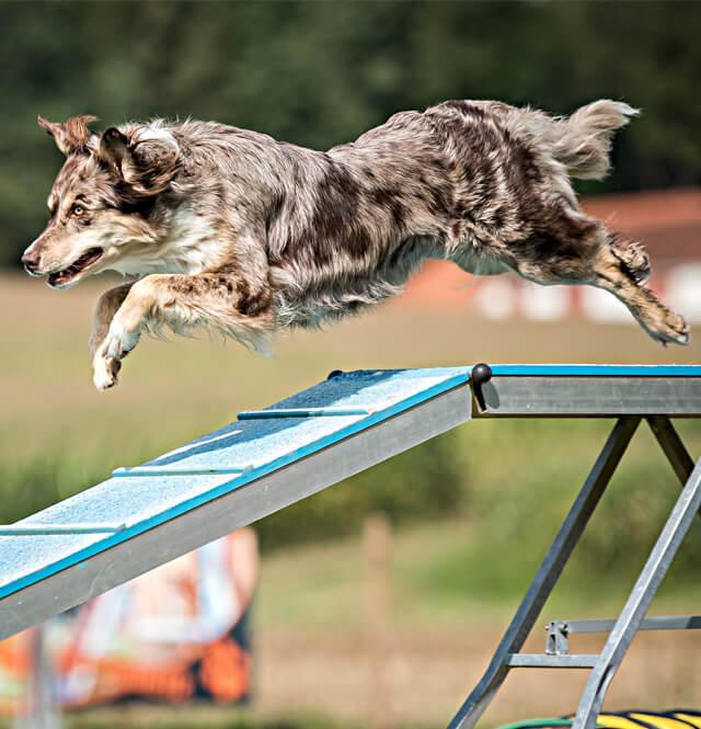 categorie_sport_canin
